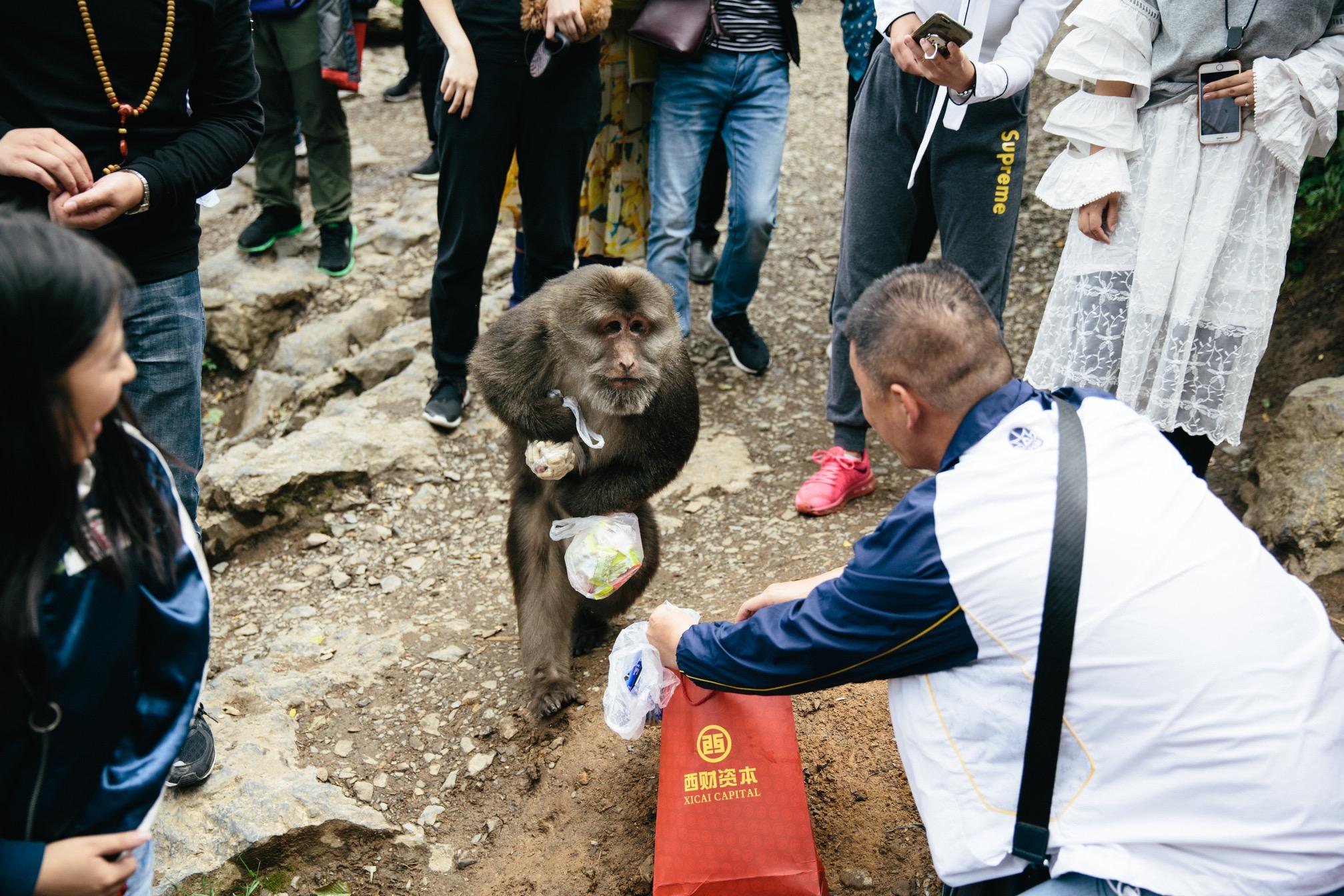 Mount Emei: Attack of the Monkeys?